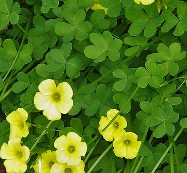Happy Saint Patrick's Day  by Jan Moore