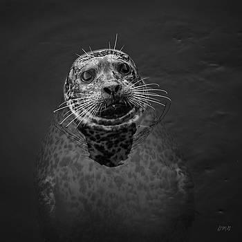 David Gordon - Harbor Seal III BW SQ