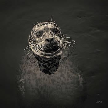David Gordon - Harbor Seal III Toned SQ