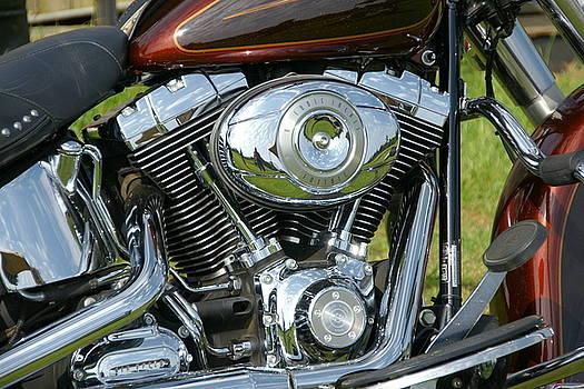 Harley  by Danny Jones