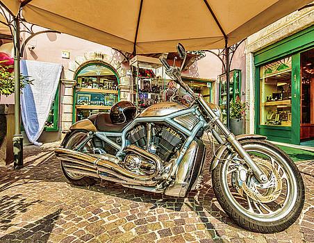 Harley by Roy McPeak