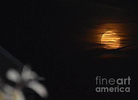 Harvest Moon by Brigitte Emme