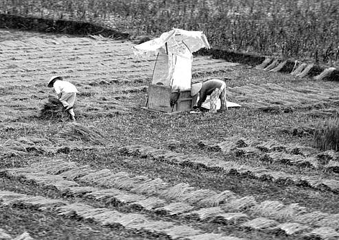 Chuck Kuhn - Harvest Vietnam