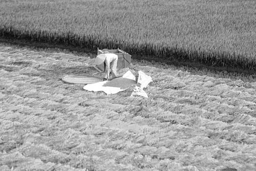 Chuck Kuhn - Harvesting the wheat