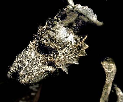 Haunted Gargoyle by Sabrina Zbasnik