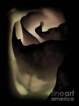 Haunted Rose by C Ray  Roth
