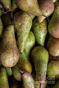 Have a Pear by Sandy Molinaro