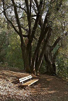 Have a Seat with the Trees by Michele Myers