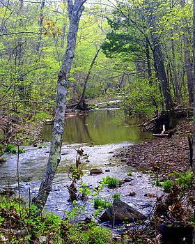 Marty Koch - Haw Creek