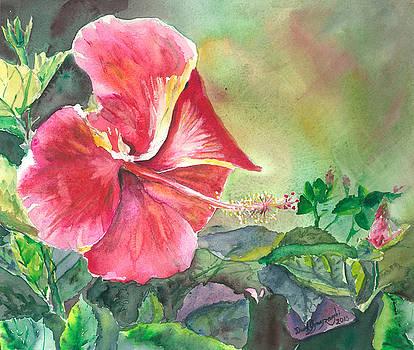 Hawaii Hybiscus by David Ignaszewski