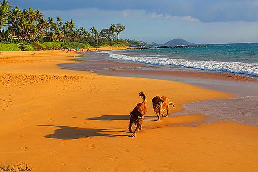 Hawaiian Beach Dogs by Michael Rucker