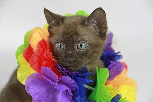 Hawaiian Kitty by Shoal Hollingsworth