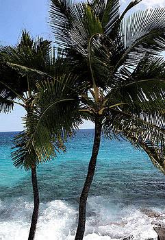 Hawaiian Palm Trees - All images copyright Karen L. Nicholson by Karen Nicholson