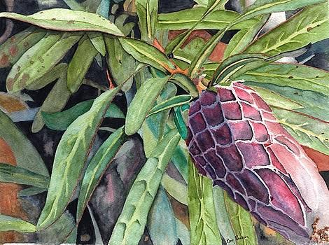 Hawaiian Protea plant by Gary Roderer