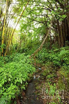 Charmian Vistaunet - Hawaiian Rainforest - Big Island Hawaii