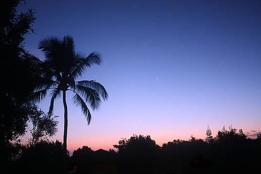 Diane Merkle - Hawaiian Twilight