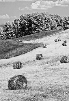 Hay by Antonio Gruttadauria