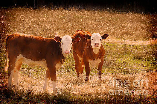 Hay Babies - Cow Art #566 by Ella Kaye Dickey