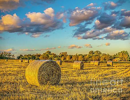 Nick Zelinsky - Hay in the Field
