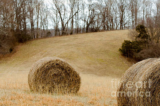 Hay on the Hills l by Victoria Lawrence