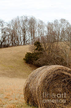 Hay on the Hills ll by Victoria Lawrence
