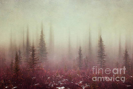 Hazy days by Priska Wettstein