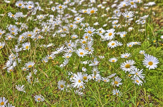 HDR Desert Wildflowers by Matthew Bamberg