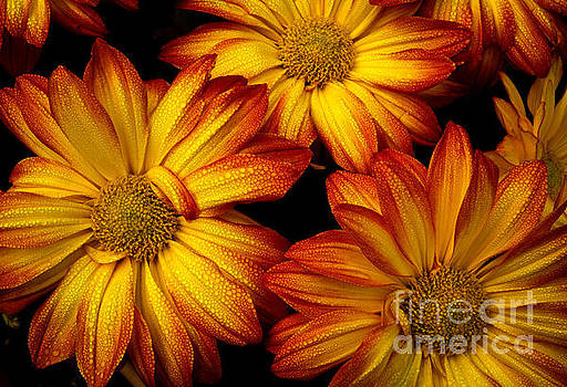 HDR Flowers by Douglas Stucky