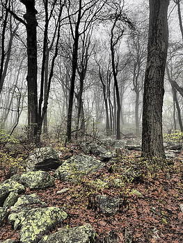 HDR woods by Luis Lugo