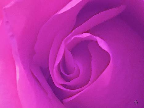 Heart of the Rose by Marian Palucci-Lonzetta
