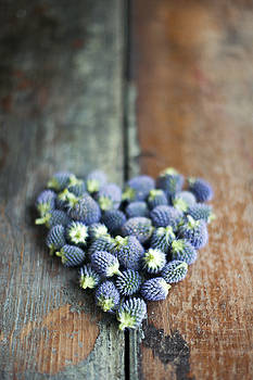 Heart Shaped Blue Thistle Buds by Di Kerpan