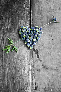 Heart Shaped Blue Thistle Buds With Arrow Stem by Di Kerpan
