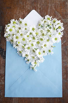 Heart Shaped Daisies in Blue Envelope by Di Kerpan