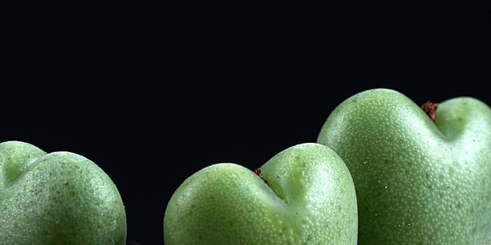 Heart Shaped Lithops by Catherine Lau