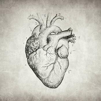 Heart by Taylan Apukovska