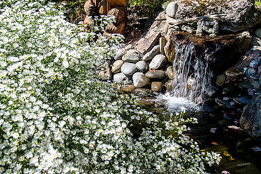 Mick Anderson - Heath Aster and the Waterfall