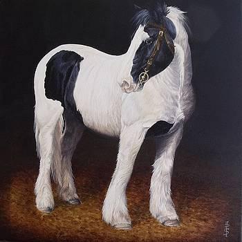 Heavy stallion  Glin fair by Pauline Sharp