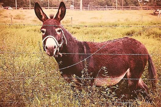 Hee Haw by Janet Moss