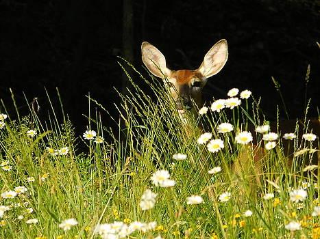 Hello Deer  by Nancy Spirakus