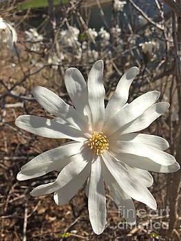 Hello Spring by Barbara Plattenburg