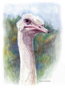 Henry the Ostrich by Mamie Greenfield