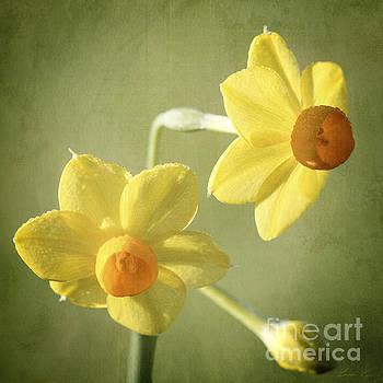 Heralding Spring by Linda Lees