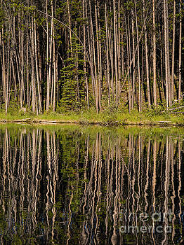 Herbert Lake Reflection  by Tracy Knauer