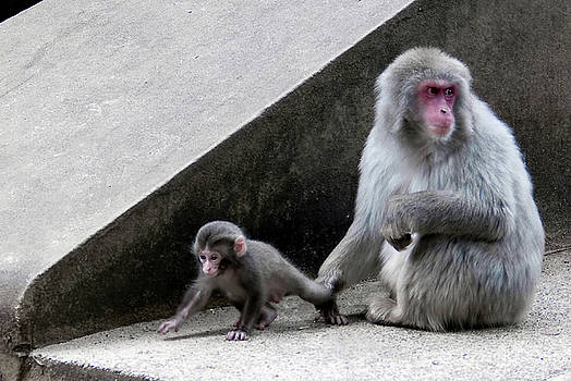 Here you - Mom Macaque and her little one by Steppeland -