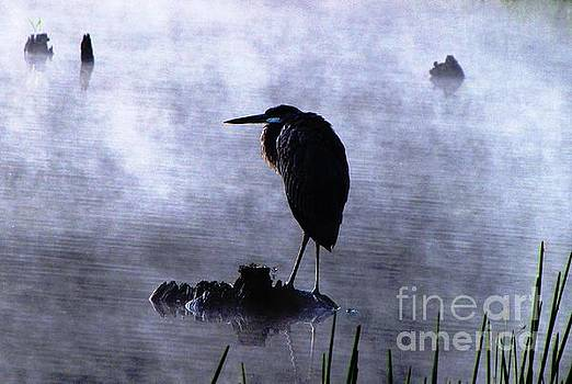 Heron 4 by Melissa Stoudt