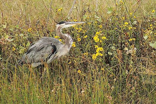 Heron And The Fall by Valia Bradshaw