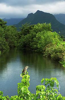 Heron at Kawainui Marsh by Charmian Vistaunet