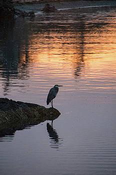 Heron at Sunrise by Marilyn Wilson