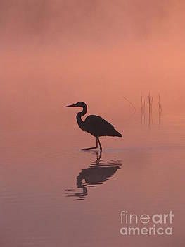Heron Collection 1 by Melissa Stoudt