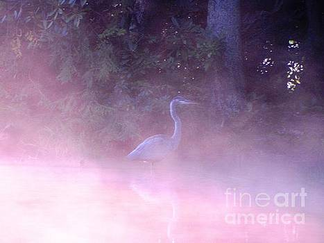 Heron Collection 3 by Melissa Stoudt